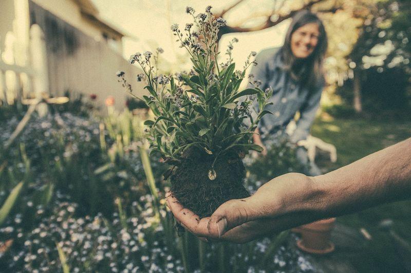 Plan Grow Seeds